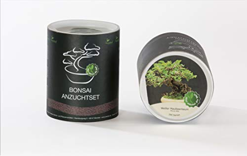 Seedeo das kleine bonsai kit de semis pour maulbeerbaum blanc