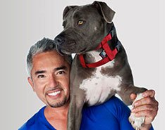 Original Illusion Collar Trainingshalsband & Leine des amerikanischen Hundeflüsterer Cesar Millan, Größe M, Rot - 2