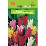 Bulbo Tulipán Flor de Lys Mezcla