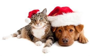 Christmas Dog and Cat Santa Hats with treats Hamper