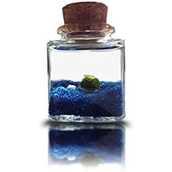 Marimo Bola De Musgo Acuarion Nano Cube Con Arena Azul - Marimo Moss Ball - Musgo Vivo RARO Japonés Terrariuo Plantas - Acuario Kit Completo - Planta Decoracion