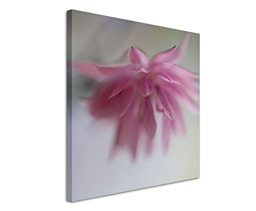 Quadratische Fotoleinwand 90x90cm Naturfotografie – Altrosa Blüte auf Leinwand exklusives Wandbild moderne Fotografie für ihre Wand in vielen Größen