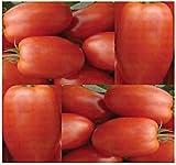 PLAT FIRM (150) Roma Tomatensamen - Heirloom - The Ketchup Tomaten