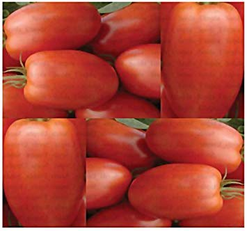 PLAT FIRM (150) Roma Tomatensamen - Heirloom - The Ketchup Tomaten