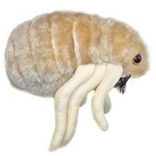 Giant Microbes Flea (Ctenocephalides felis) by Giant Microbes