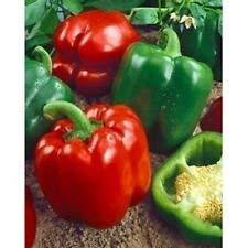 VISA STORE Keystone Resistant Paprika 200 Samen Große resistent gegen Krankheiten