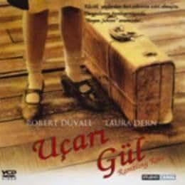 Ucari Gul - Rambling Rose