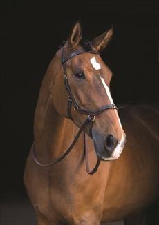 Zaumzeug, für Zäumung mit Gebiss und gebisslose Zäumung / Kappzaum von Rambo, braun, Standard Horse