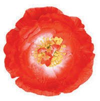 PARTY DISCOUNT Hawaii-Blume Hibiskus mit Clip, rot