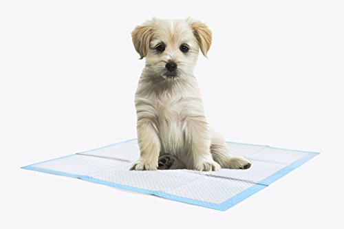 Gantex Com Puppy Training Kitten / WC Pad, Incontinence Pad Ultra Absorbent - 60 x 60 cm, Pack of 6