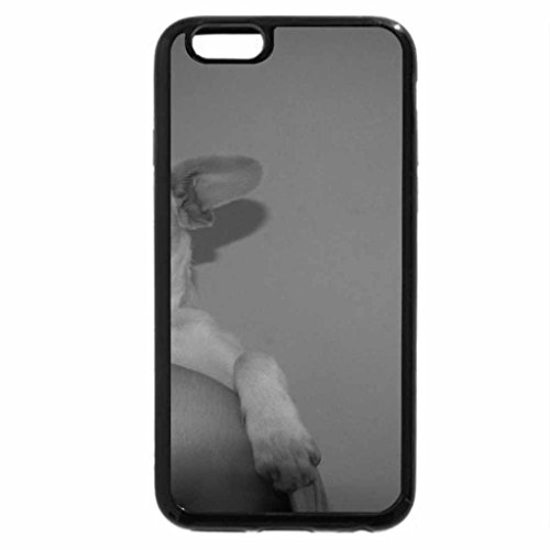 iPhone 6 Plus Case (Black & White) - light tan chihuahua (Black Tan Chihuahua)
