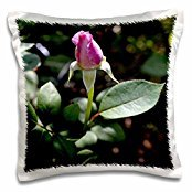 light-pink-rose-bud-getting-ready-to-open-16x16-inch-pillow-case