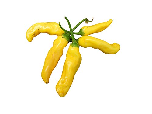Ananas-Chili -Aji Pineapple- 10 Samen *Leckere Chili mit Ananasaroma* Top-Ertrag