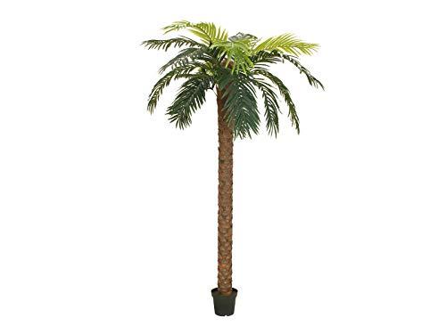 Unbekannt EUROPALMS Phönix Palme Deluxe, Kunstpflanze, 250cm