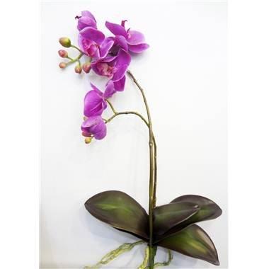 Gd Bo Balcons - Orchidée Plante - 56Cm
