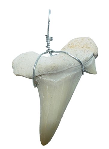 Haifisch - Zahn versteinert als Kettenanhänger mit Metallöse und Band ca. 3 Millionen Jahre alt (Zahn Anhänger Halskette Unter 5)