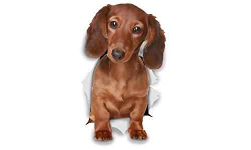 Winston & Bear Perro 3D pegatinas - Pack 2 - Dachshund pelo largo para pared, pegatinas de perro Teckel de pelo largo de nevera