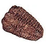 Trilobite Fossil Archeology 2-3 Inch Specimen w Info Card by Squire Boone Village