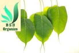 BSD Organics FreshY Peepal Leaves/Arasa illai for Skin care, Oral care, Tea and more -25 grams