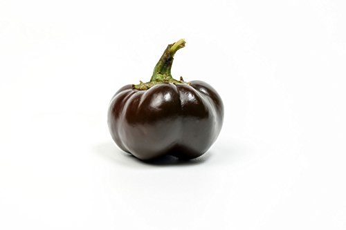 Mini Bell chocolate - 30 Paprika Samen -