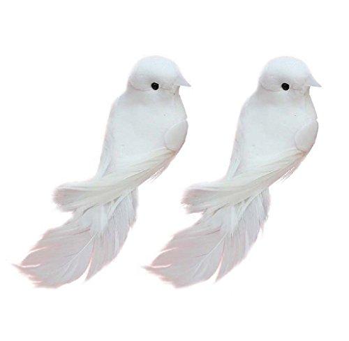 Taubenpaar | Turteltauben