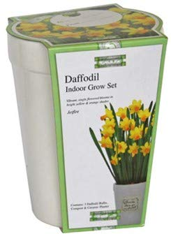 Narciso Rodriguez Essence (Narciso Grow-Set für die Anzucht mit gelben Blumenzwiebeln von Narciso, Keramik, rechteckig und Groß)