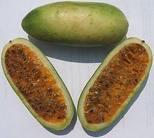 Bananen Passionsfrucht -Leckere Früchte und schöne Blüten- * passiflora mollissima * von Samenchilishop auf Du und dein Garten