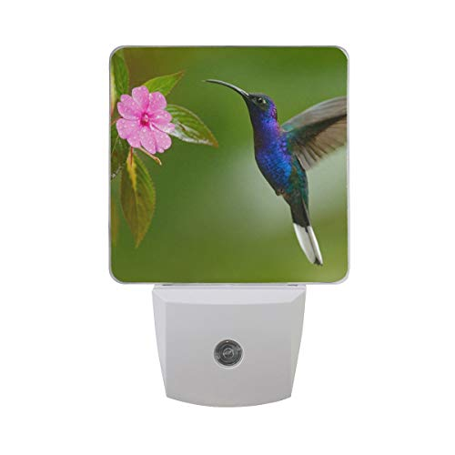 DFISKK Nachtlicht Set of 2 Violet Hummingbird Pink Flower with Leaves Water Drop On Fuzzy Green Auto Sensor LED Dusk to Dawn Night Light Plug in Indoor for Adults -