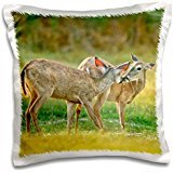 Deer - USA, Texas, Rio Grande Valley, Whitetail deer 16x16 inch Pillow Case
