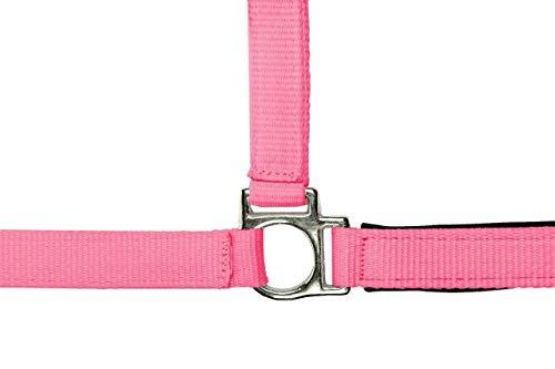 HKM Halfter -Stars Softice-, weich unterlegt, Neon pink, Vollblut