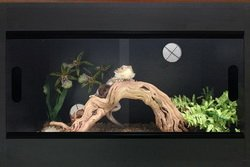 Terapod Slim Reptile Vivarium - Various sizes & colours from Terapod