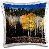 Scott T. Smith - Forests - Utah, USA, Aspen trees in autumn. Fish Lake Basin. Fishlake NF. - 16x16 inch Pillow Case