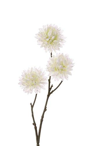 Winteraster Mix aus drei Blütenfarben