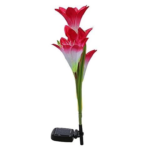 SODIAL (R) 4LED Fleur Solaire Lis Pelouse Cour Lampe Jardin No?l Ext¨¦rieur D¨¦coration