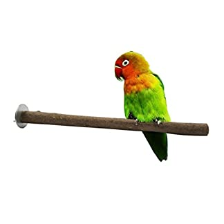 Crasy Shop Wooden Bird Cage Perch Stand Parrot Paw Grinding Toy for Bird Parrot Macaw African Greys Budgies Parakeet Cockatiels Conure Lovebird 31BVa4rXVKL