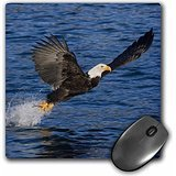Danita Delimont - Eagles - Alaska, Kachemak Bay State Park, Bald eagle - US02 BJA0277 - Jaynes Gallery - MousePad (mp_87400_1) - Bay State Park