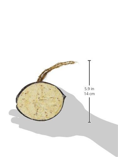 dobar Zehn gefüllte Kokosnüsse in 5 Vogelfutter-Sorten zum Aufhängen - 13