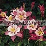 Heirloom 100% Echt orange Jasmin Strauch mit duftenden weißen Blumensamen, 20 Samen / Beutel, Murraya