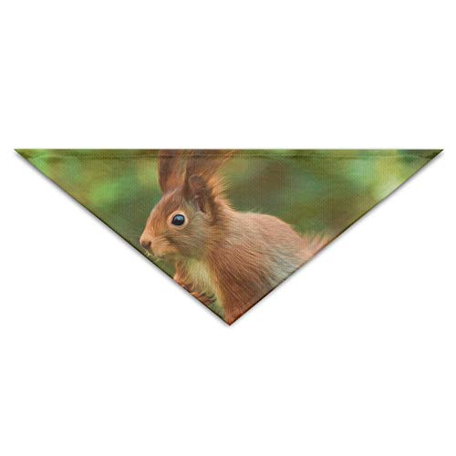 dfegyfr Little RABIT Painting Triangle Pet Scarf Dog Bandana Pet Collars for Dog Cat - Birthday