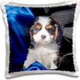 dogs-a-cavalier-king-charles-spaniel-puppy-dog-16x16-inch-pillow-case