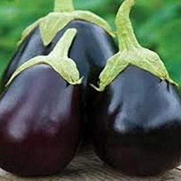 (Bloomgreen Co. Bloom Green Co. F1 BRINJAL CRYPTON Kranti SEEDS (AVG 50-100) SEEDS X 9 PACKET)