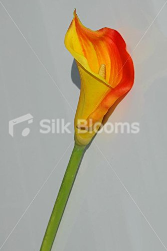 fresh-touch-qualite-taille-m-flamme-orange-calla-lily-beaute-lily