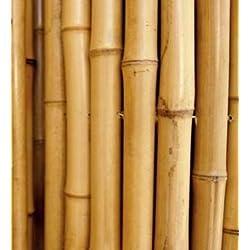 Cañas de bambú para sujetar hortalizas y otros usos, 180 cm