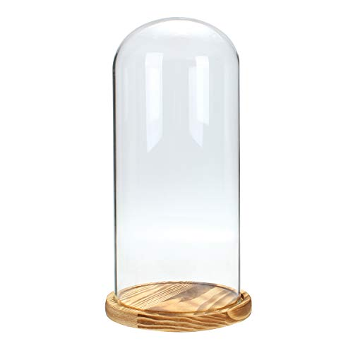 ome Holzbasis Cloche Bell Jar Display Stand Micro Landscape Dried Blume Diy Vase ()