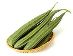 RIDGE GOURD LONG VARIETY JAIPUR LONG ( 20 SEEDS) BY DIVYA SEEDS