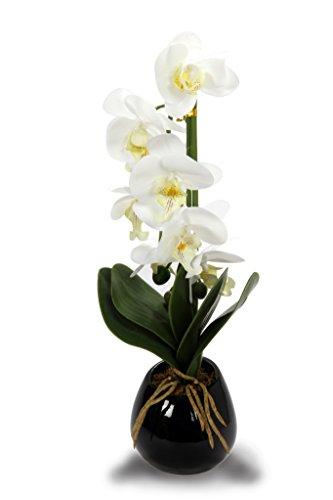 Black Pot with White Flower