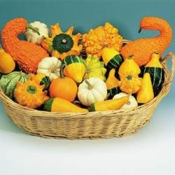 gourd-ornamental-mixed-40-seeds