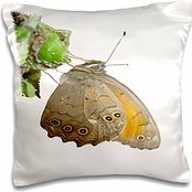 taiche-vector-butterfly-meadow-brown-butterfly-feeding-on-aphids-16x16-inch-pillow-case