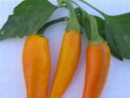 Portal Cool Gemüse - Pfeffer (Paprika) - Bulgarian Carrot - 50 Samen - Große