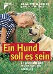 Ein Hund soll es sein: So gelingt der Start in eine glückliche Beziehung